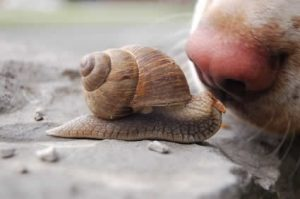 snail and dog's nose