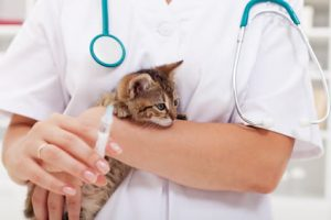 kitten having vaccinations